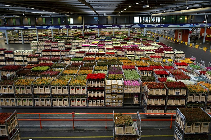 Flowers business: Flower warehouse south Gujarat, India