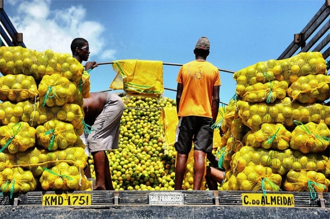 Workers preparing to sell oranges in Brazil