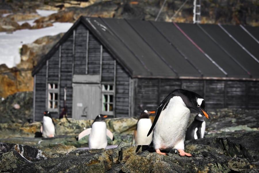 Antarctica, Penguins