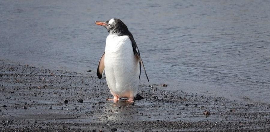 Deception Island (Antarctic Peninsula)