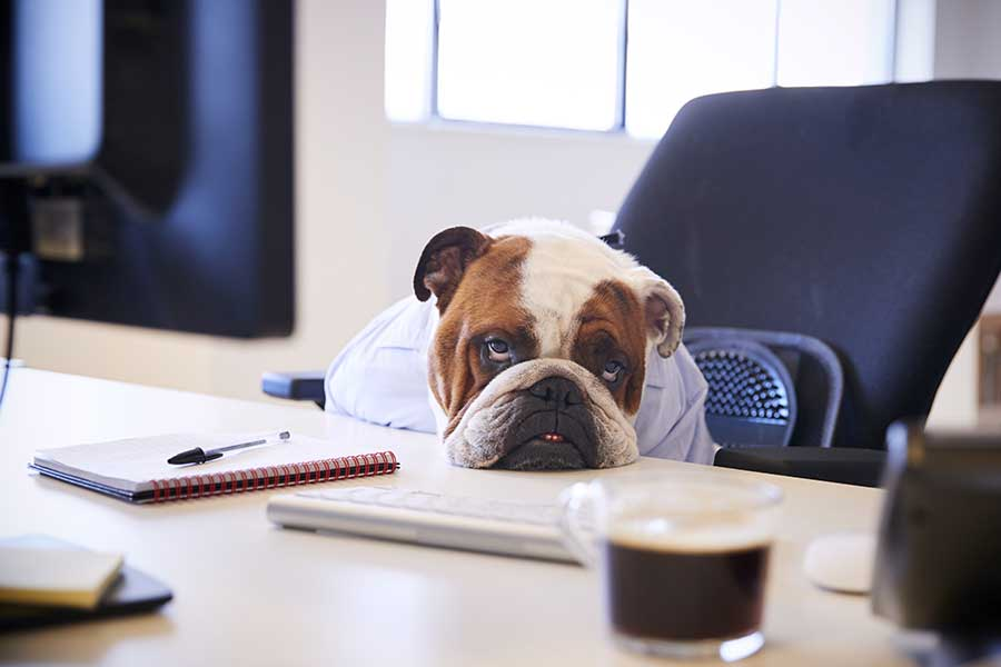 Dog Dressed As Businessmen