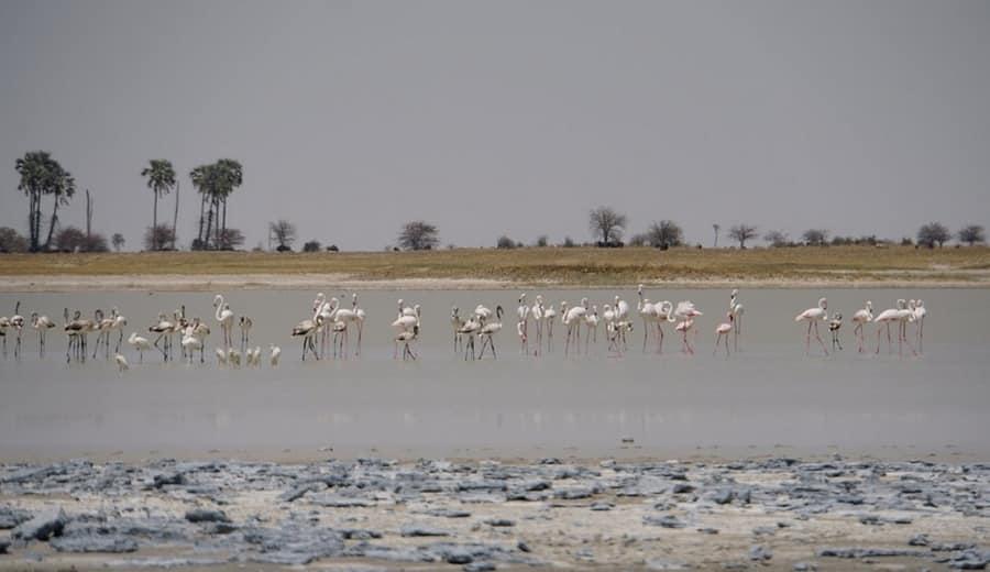Makgadikgadi Pan, Africa