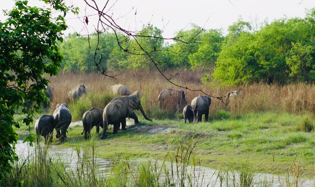 Royal Bardia National Park, Nepal