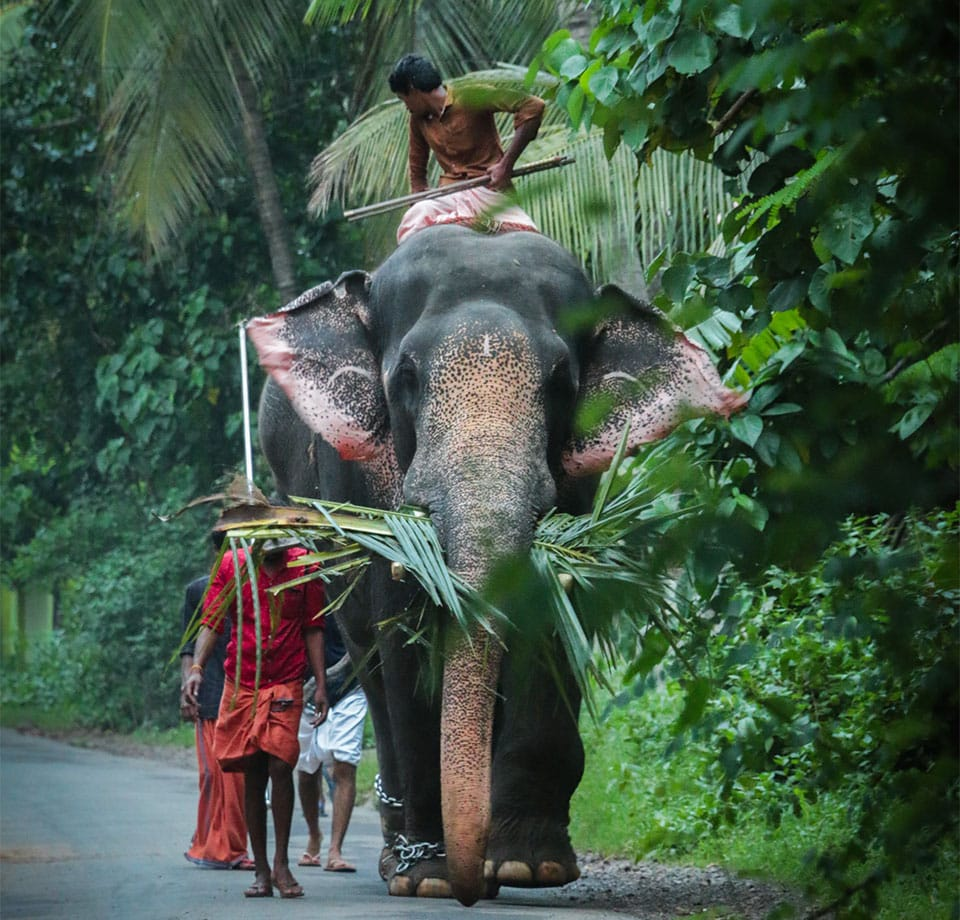 Elephant Kerala India